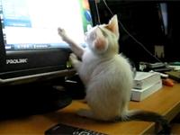 Mèo bắt chuột thời @