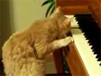 Mèo chơi đàn piano