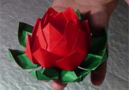 Hoa sen giấy