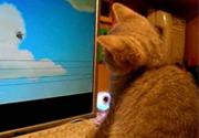 Mèo xem hoạt hình