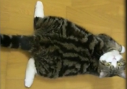 Mèo Maru dễ thương