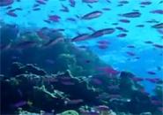 Lặn ngắm san hô Côn Đảo