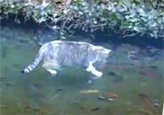Mèo bắt cá trên băng