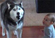 Chú chó hát cùng em bé