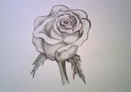 Cách vẽ hoa hồng