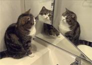 Chú mèo soi gương
