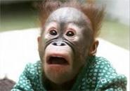 Những chú khỉ hài hước