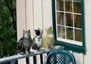 Tam ca ba con mèo