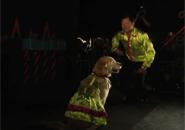 Điệu nhảy của chú chó đáng yêu