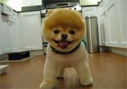 Cún cưng tinh nghịch