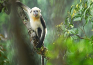 Những chú khỉ tinh nghịch