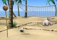 Gấu Bernard chơi bóng chuyền