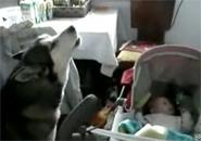 Chú chó hát ru em bé ngủ
