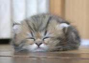 Mèo mơ ngủ