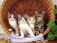 Những chú mèo con đáng yêu