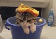 Mèo nghịch nước