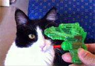 Mèo thích súng nước