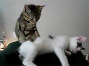 """Nhân viên massage """"chuyên nghiệp"""""""