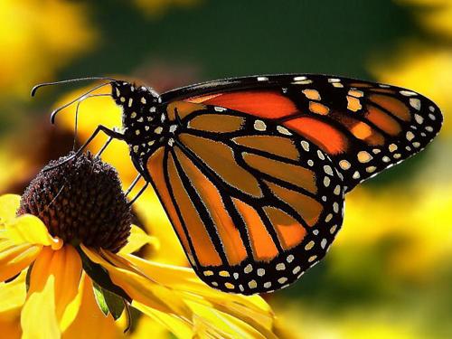 Quá trình lột xác của bướm chúa
