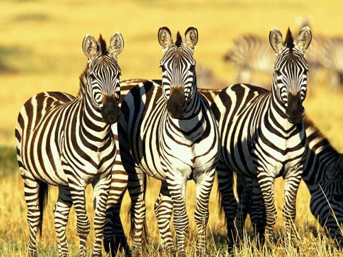 Thế giới động vật ở Châu Phi