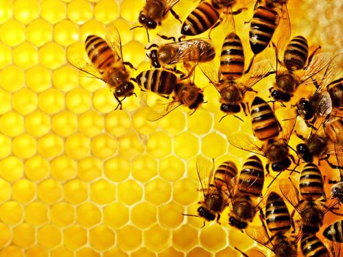 Cách sản xuất mật ong ngọt ngào